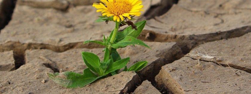 Resilienza, la capacità di reggere agli urti della vita